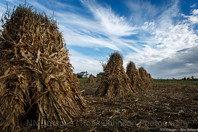20131109-5D312444  Haystacks in Amish Country