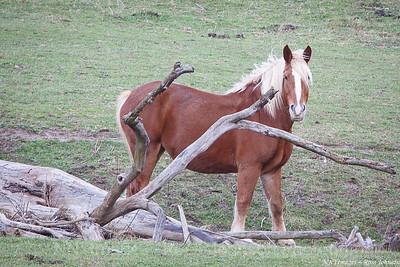 20131109-5D312435  Amish Horses