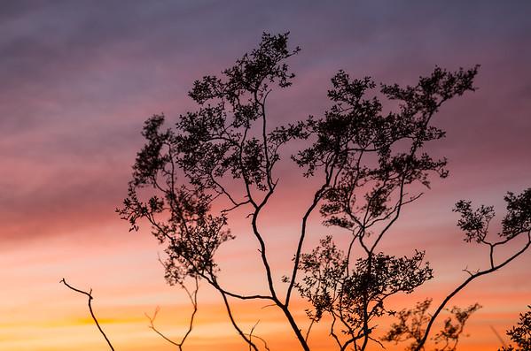 Desert Tree at Sunset