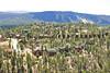 Big Bear Lake Aerial Photo IMG_8895