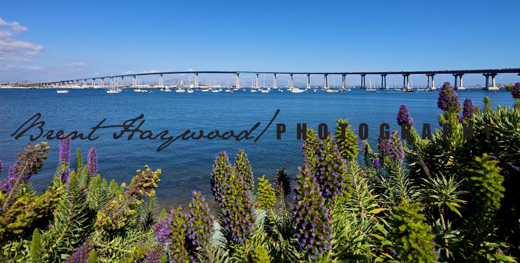 Coronado Bay Bridge IMG_3997