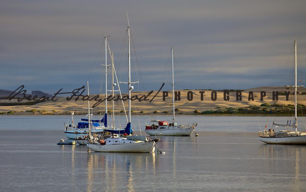Morro Bay IMG_7974