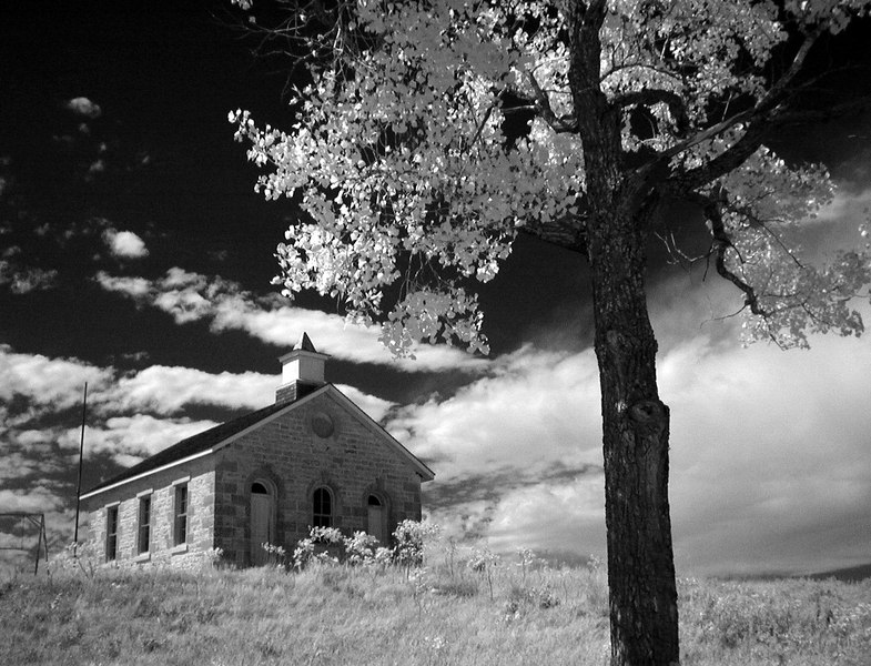 SMschooltreeInfrared