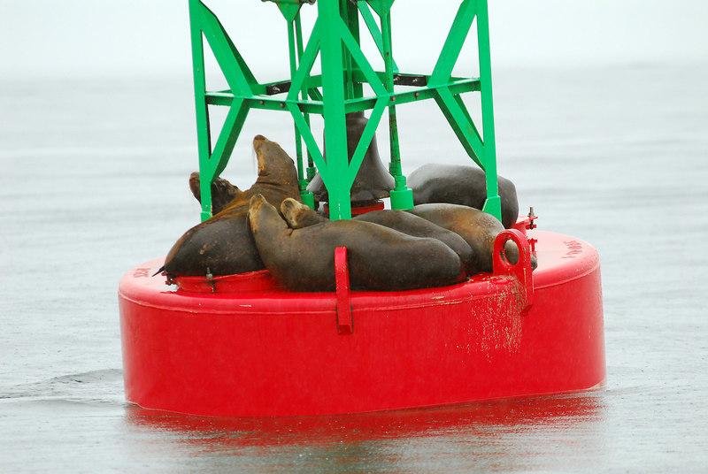 Sea lions on buoy near Juneau.