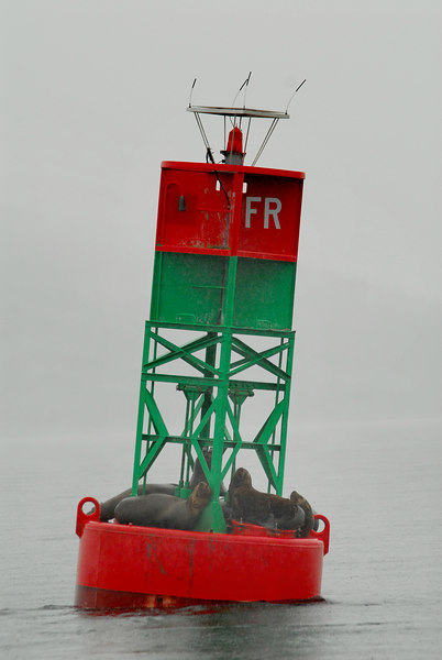 Sea lions on buoy near Juneau.