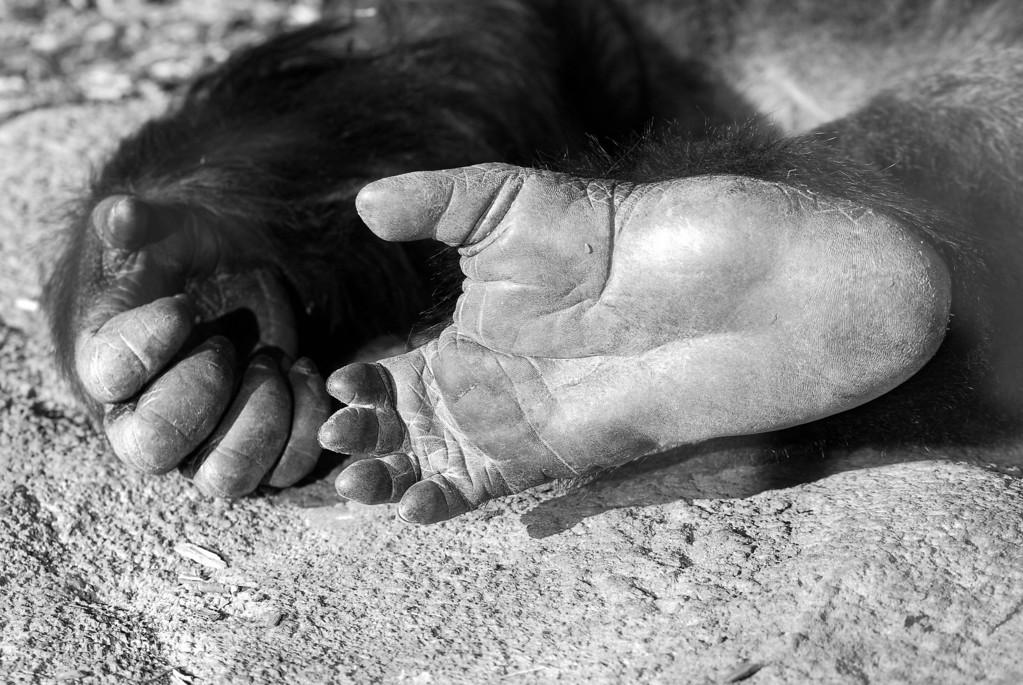 Gorilla Foot