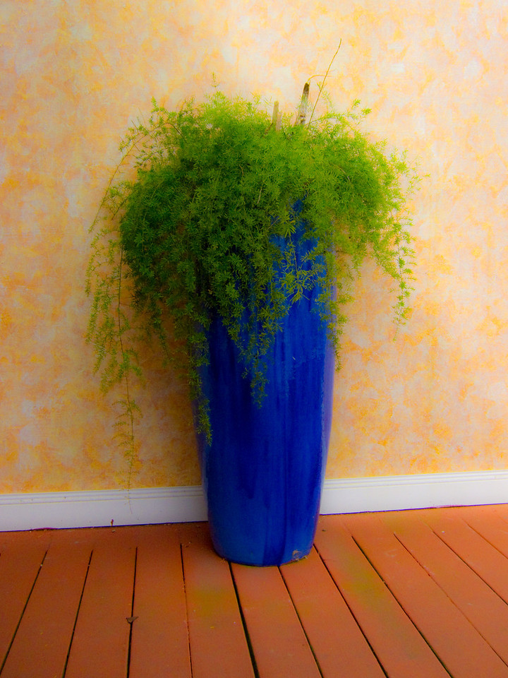 Green plant in bright blue floor vase.