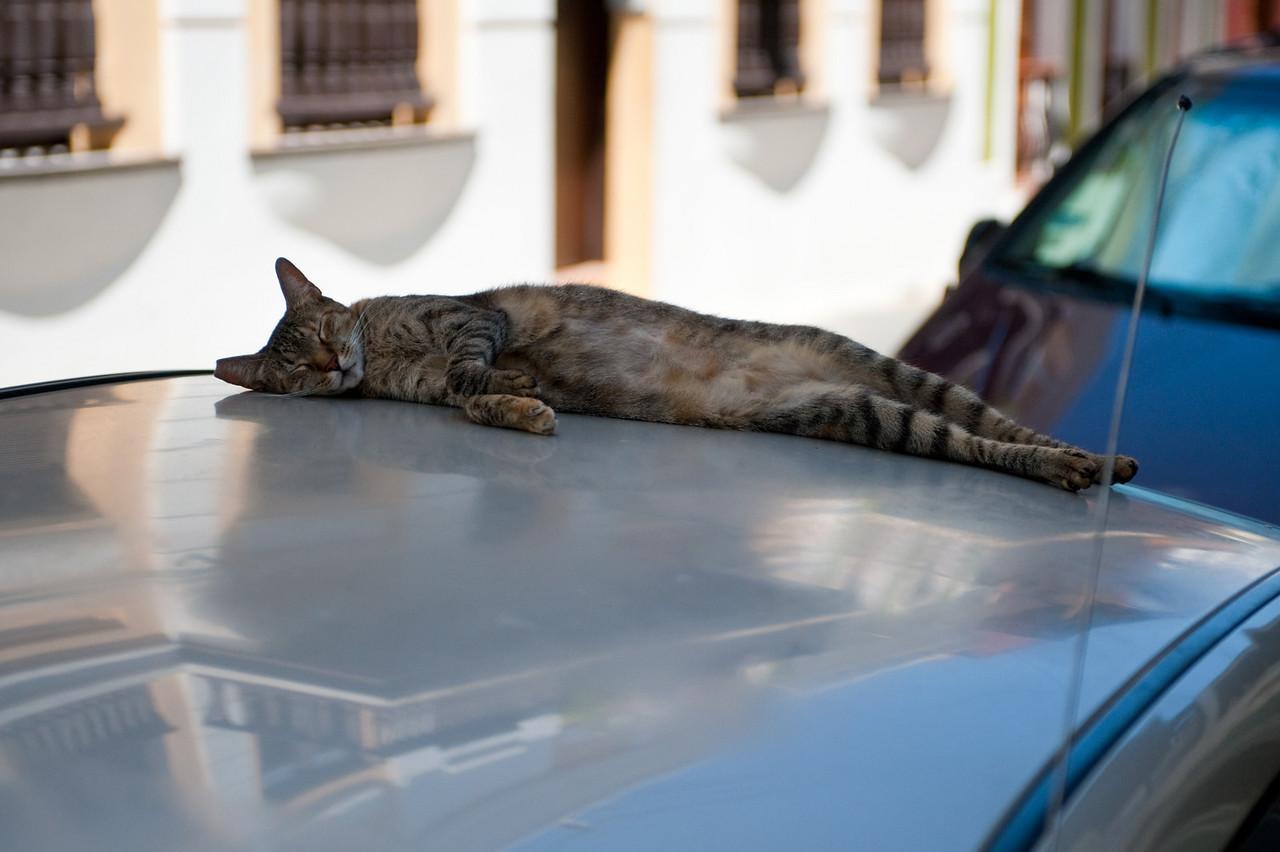 Street cat sleeping on top of car in Old San Juan.