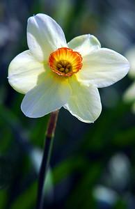 Botanica flower