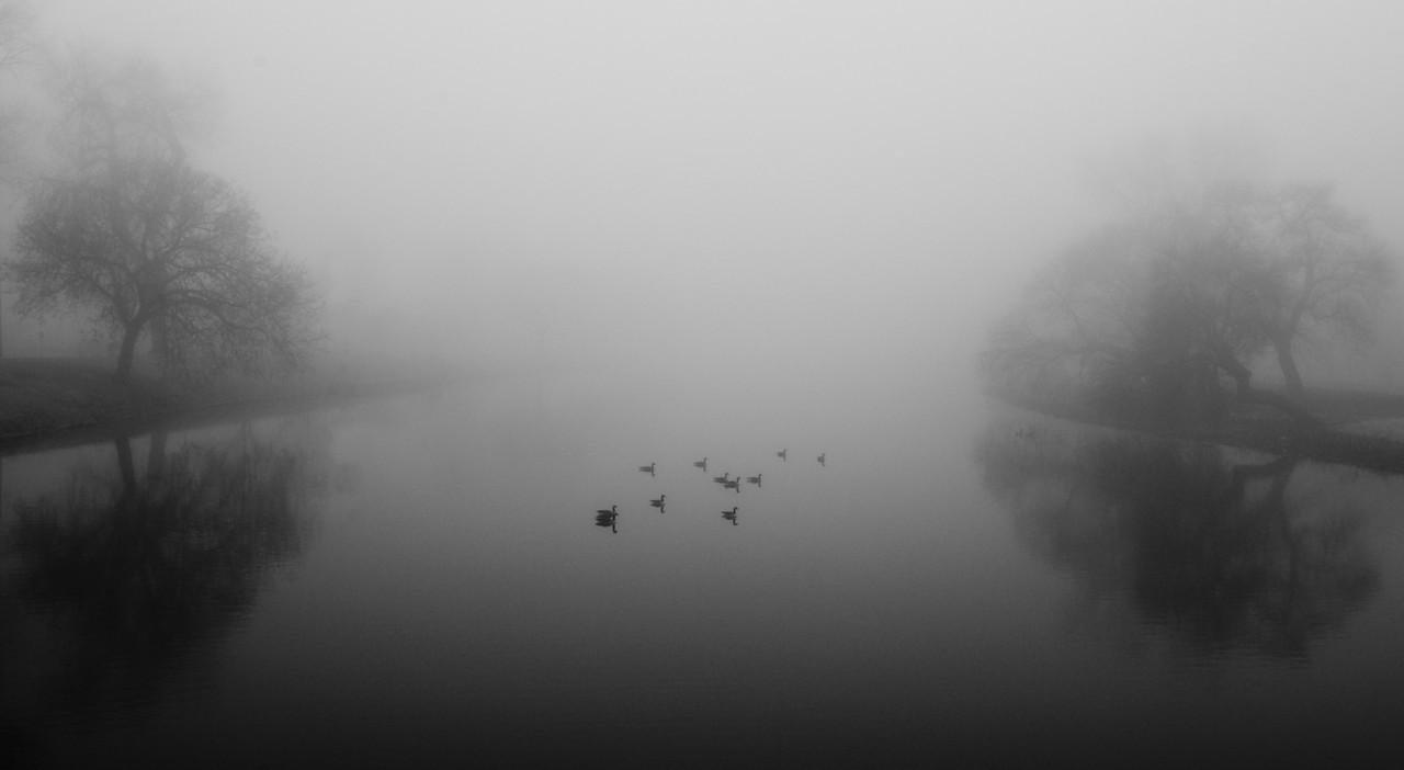 Geese in fog on the Arkansas River in Wichita, Ks.