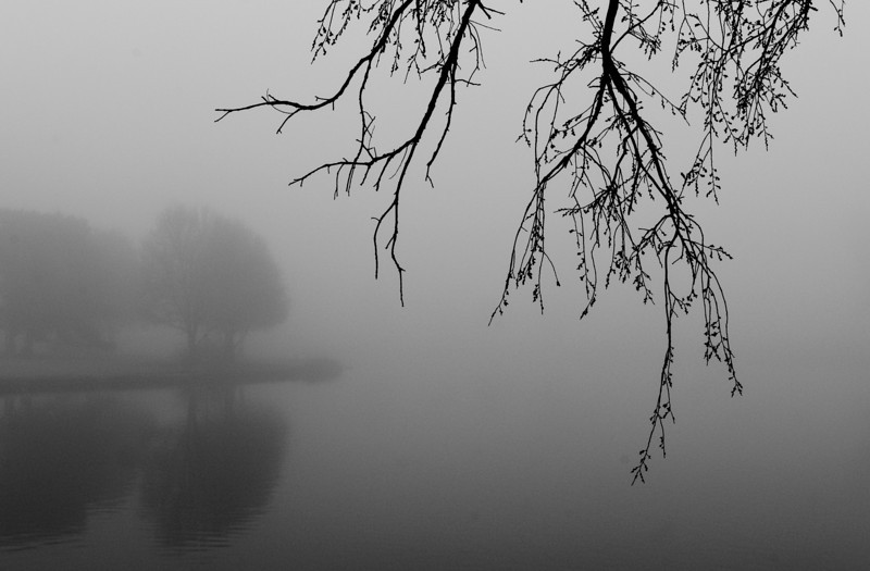 Foggy scene along the Little Arkansas River, Wichita, Ks.