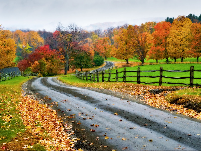 A damp but colorful view of fall foliage along winding Galaxy Hill Road,  Vermont.