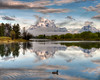 A duck leaves a wake in the mirror smooth water at Oxbow Bend, Grand Teton National Park.