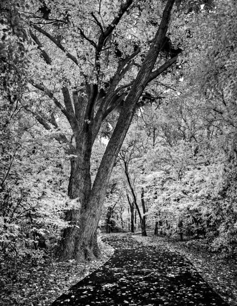 The Path jpg