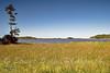 Hoopers Island 9-12-07