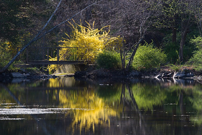 Forsythia Bridge