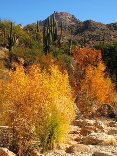 Catalina State Park, Arizona