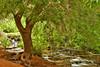 Havasu Creek. Arizona