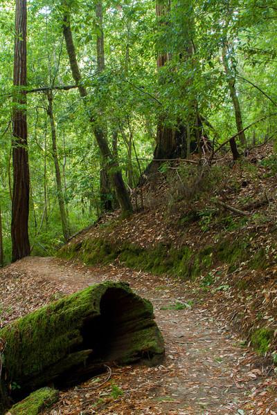 Big Sur Redwoods, California.  October 2009