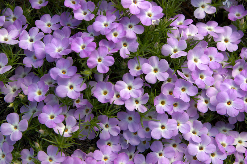 Yosimite National Park, California.  May 2006