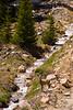 Mule Deer, Mount Evans, Colorado