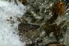 Arctic Grayling, Roosevelt National Forest, North Park, Colorado.  June 2014