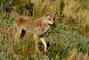 Coyote, Colorado.  July 2005