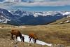 Elk.  RMNP, Colorado.  June 2017
