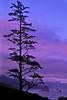 Dawn at Ecola State Park, Oregon