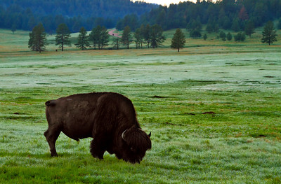 Custer State Park and Wildlife Reserve