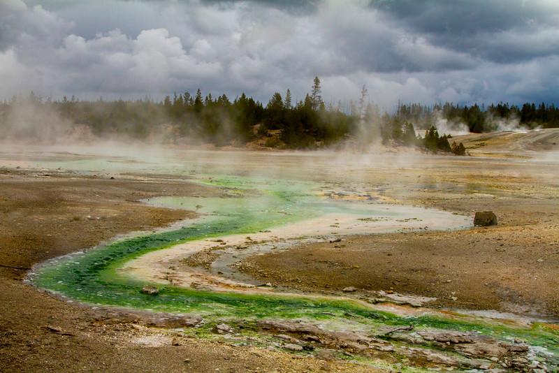 Porcelain Basin, Norris Geyser Basin, Yellowstone National Park, Wyoming.  May 2015