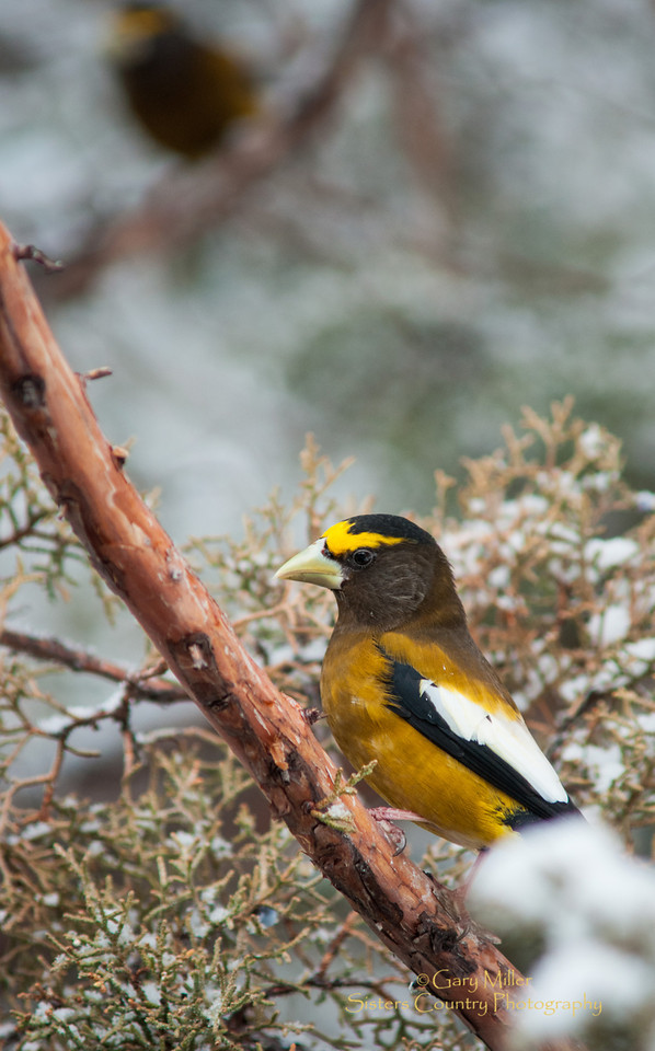 Birds in Winter - Photo by Gary N. Miller - Sisters Country Photography