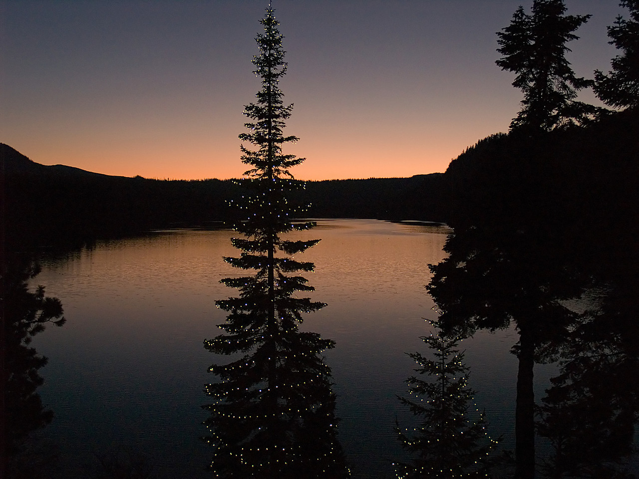 Suttle Lake Resort Christmas Tree...waiting