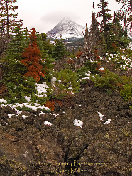 McKenzie Pass lava and snag fields - Central Oregon Cascades.