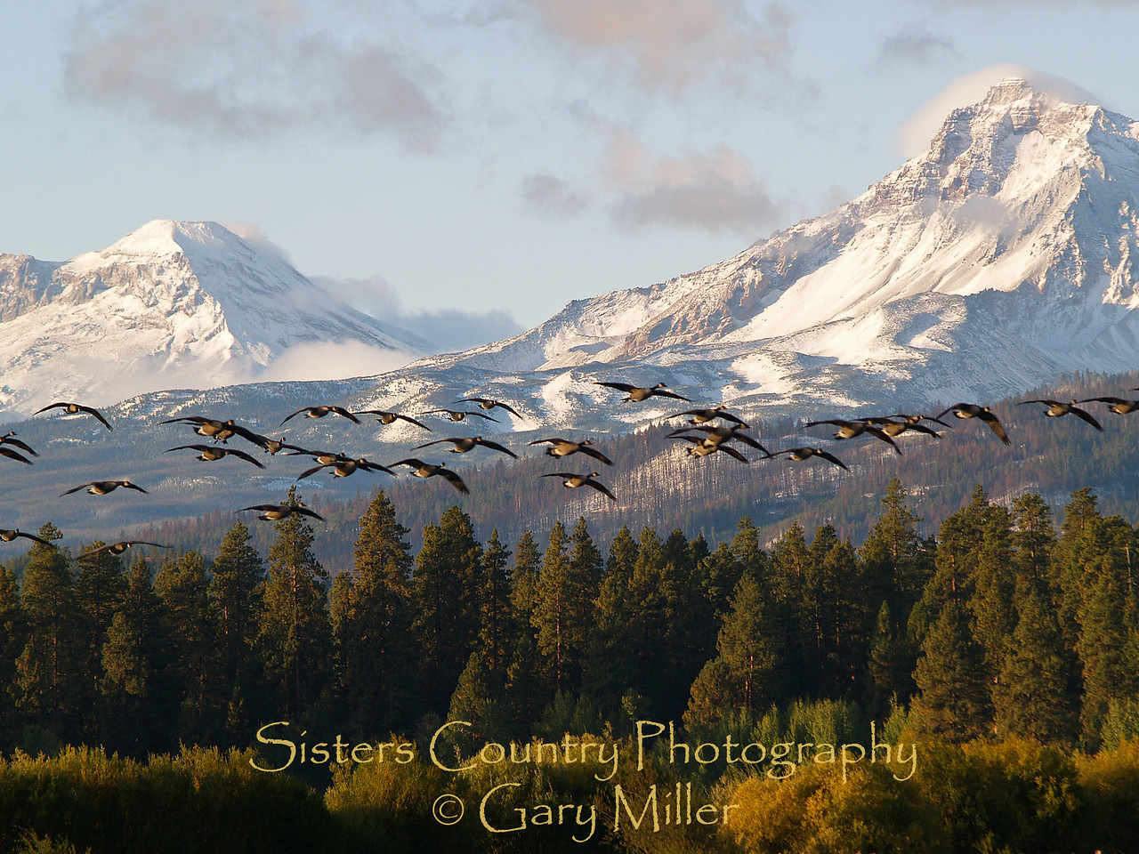 Canadian Geese fly in front of the Three Sisters in the Central Cascades from Black Butte Ranch - Sisters, Or - Sisters Country Photographyr.
