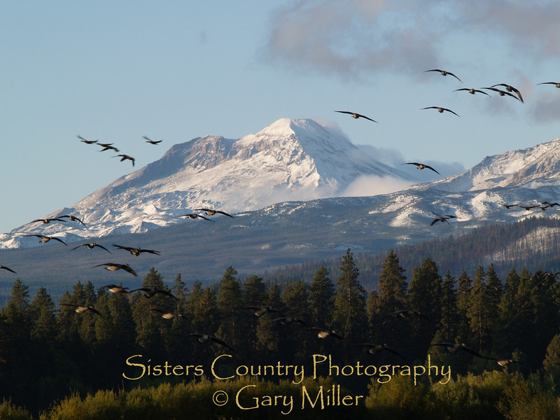 Canadian Geese fly in front of the Three Sisters in the Central Cascades from Black Butte Ranch - Sisters, Or - Sisters Country Photography