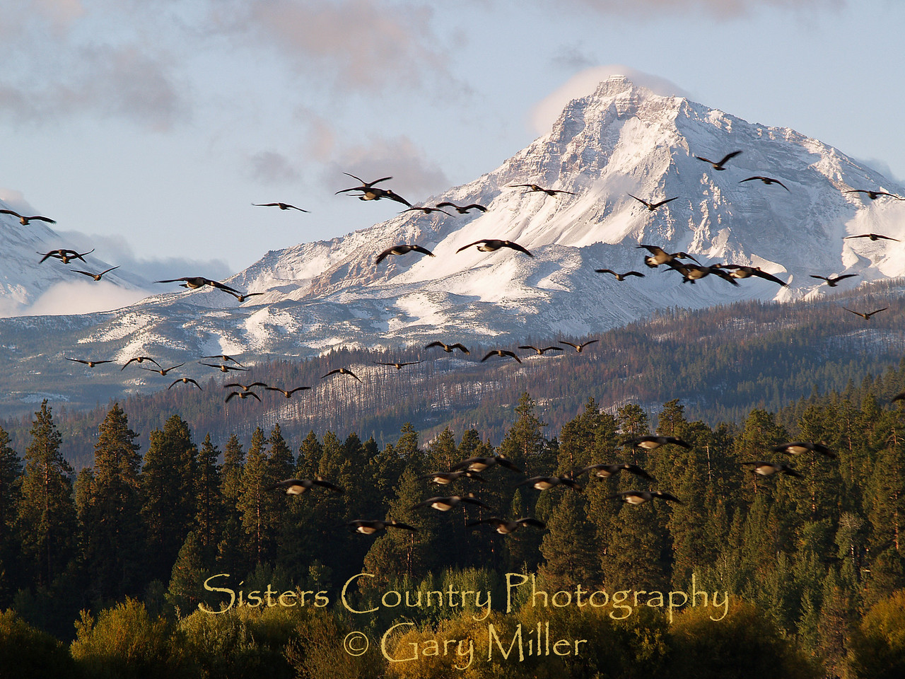Time to be moving on. Canadian Geese fly in front of the Three Sisters in the Central Cascades from Black Butte Ranch - Sisters, Or - Sisters Country Photography
