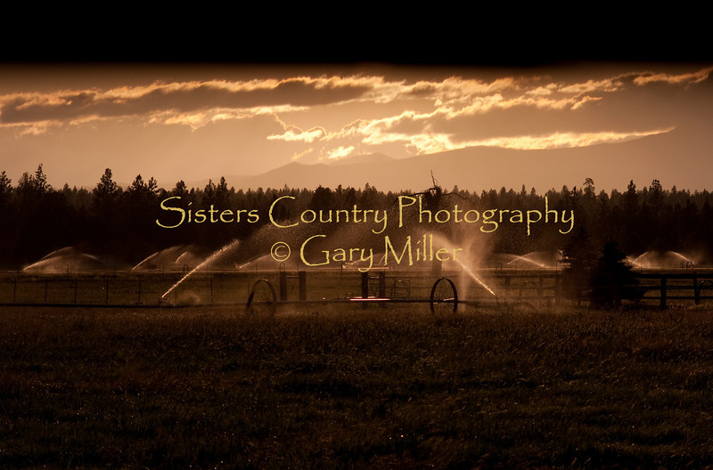 Deggendorfer Ranch, Sisters, OR, as shot into the blinding sun and shaded by the photographer's hand. Photo by Gary Miller