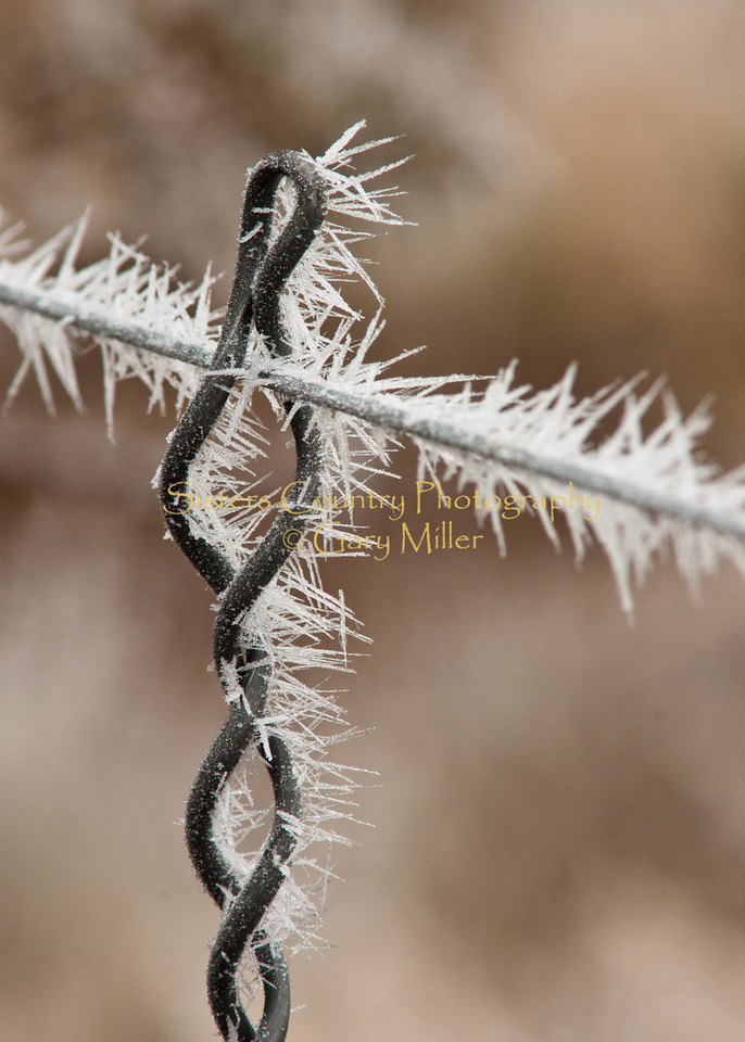 An icy hoar frost creates it's own unique flavor of barbed wire. Sisters, Oregon. Photography by Gary Miller