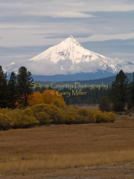Mt. Jefferson from Indian Meadow. Sisters, OR