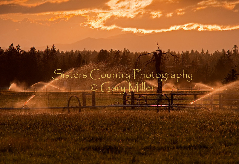 Deggendorfer Ranch, Sisters, OR, as shot into the blinding sun. Photo by Gary Miller