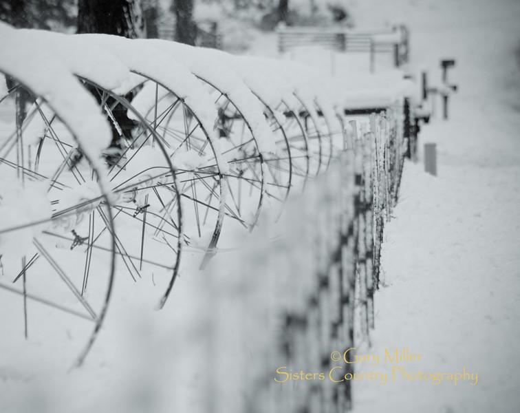 GM_Snow-05745