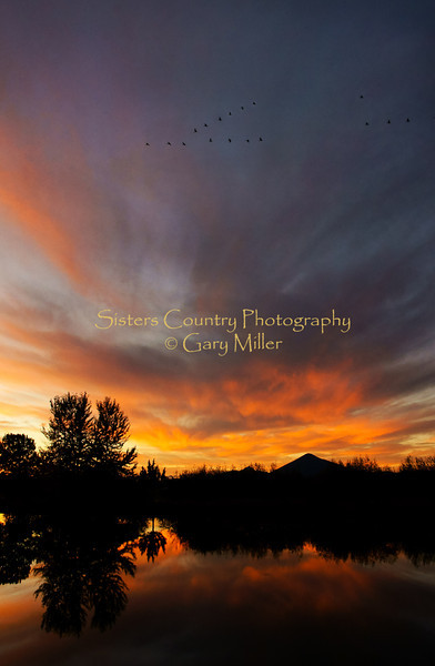 Evening Flight - Gary N Miller - Sisters Country Photography