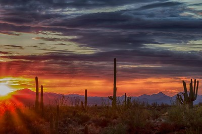 Sunset over the Sonoran Desert