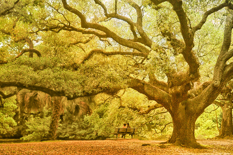 Under the Live Oak Tree