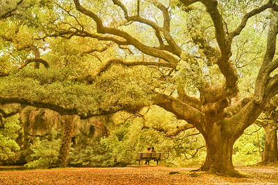 Under the Live Oak Tree