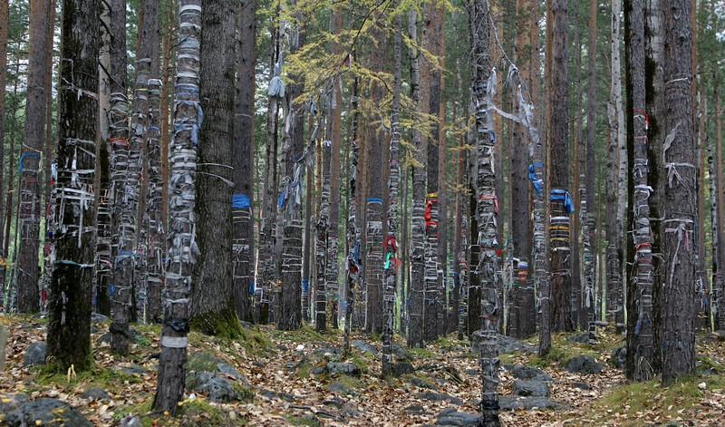 A sacred forest site in Buriatia, Siberia (2008)