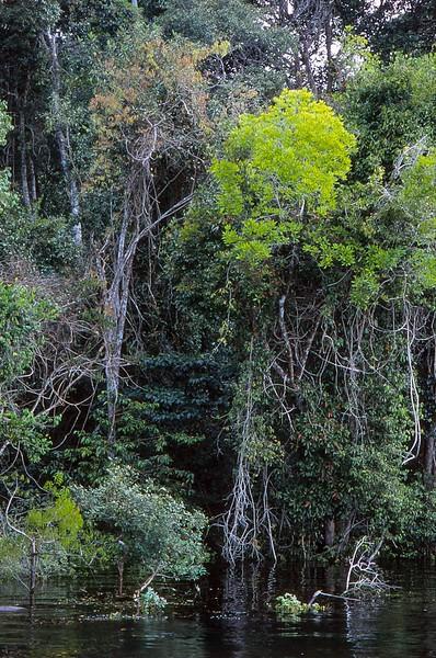 Rio Negro, Amazon, Brasil.