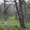 Oak forest in Turkey