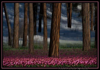 trees with tulips and snow